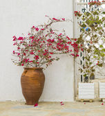 A pot of Bougainville walls — Stock Photo
