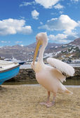 White pelican on blue sky with clouds — Fotografia Stock
