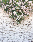 White-washed walls of stone with flowers — Stock Photo