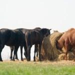 Horses — Stock Photo #3004784