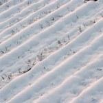 Snow — Stock Photo #3665370