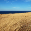 Yellow dry grass field, blue sea and sky — Stock Photo