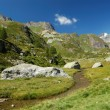 Summer alpine landscape — Stock Photo