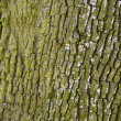 Closeup of tree texture — Stock Photo