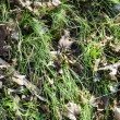 Stock Photo: New grass