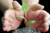 Green plant on background of blurring hands — Stock Photo