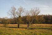 Autumn Landscape — Zdjęcie stockowe
