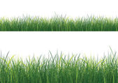 Isolated Grass — Stock Vector