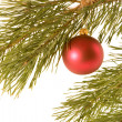 Christmas ball on fir banch — Stock Photo