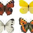 Set of  vector realistic butterfly — Stock Vector