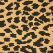 Fabric - leopard skin — Stock Photo