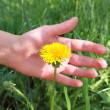 Female hand with dandelion — Stock Photo
