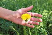 Female hand with dandelion — Стоковое фото