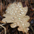 Moisture on dropped leaf lying in grass — Stock Photo