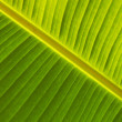 Detail of green leaf growing near waterfall Agua — Stock Photo