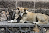 Dogs on the street in San Cristobal — Stock Photo