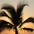 Palm in susnet light in Puerto Escondido — Stock Photo