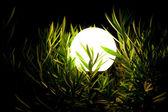 Bir çim 2 gece fener — Stok fotoğraf