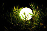 Night lantern in a grass 2 — Stock Photo