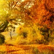 Autumn forest with sun beam — Foto Stock