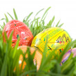 Color easter eggs — Stock Photo #3004422