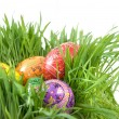 Color easter eggs — Stock Photo #3004433