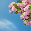 Spring blossom — Stock Photo #3004862