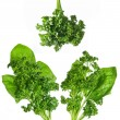 Green spinach — Stockfoto