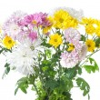 Chrysanthemum bouquet — Stockfoto