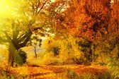 Autumn forest with sun beam — Stockfoto