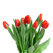 Szczegół czerwone tulipany na białym tle — Zdjęcie stockowe