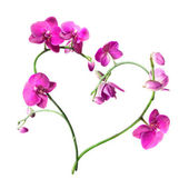 Heart from pink orchids isolated — Stock Photo