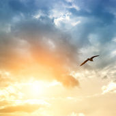 Bird and dramatic clouds — Stock Photo
