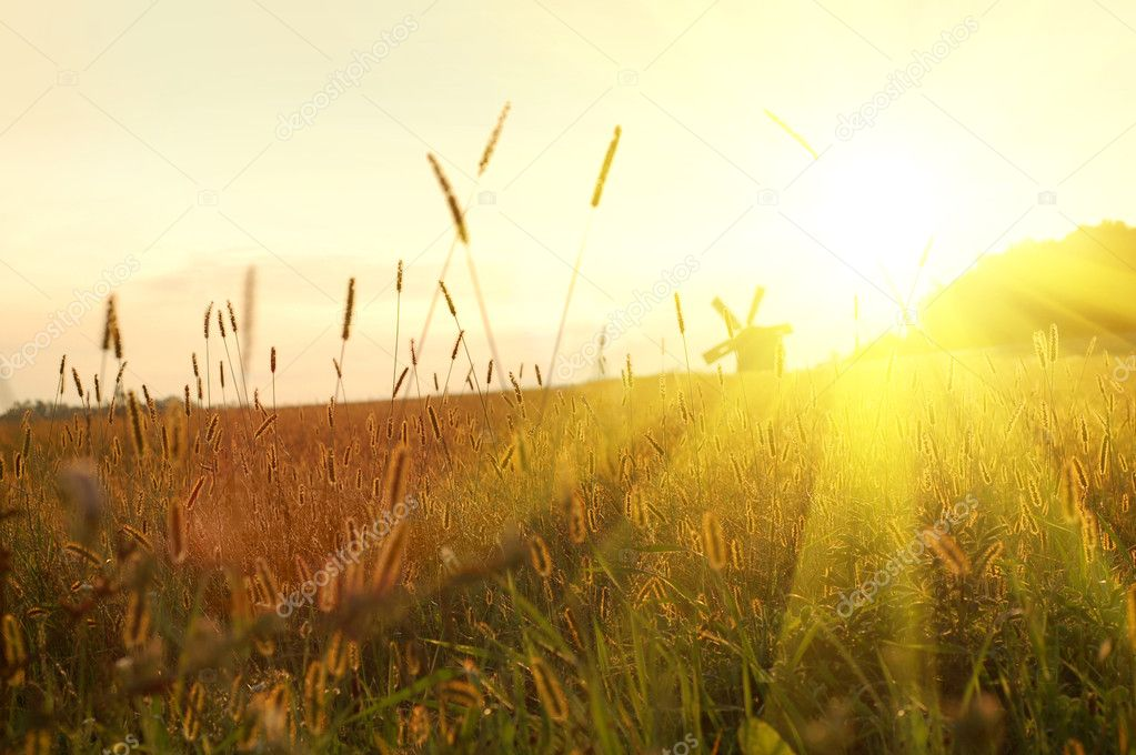Field on sunset — Stock Photo #3003371