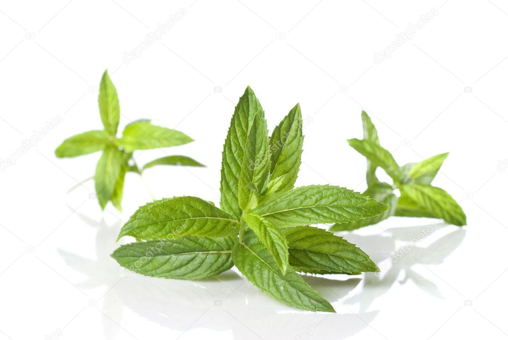 Green mint isolated on white  Stock Photo #3004989
