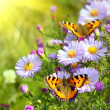 Two butterfly on flowers — Stock Photo #3020041