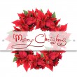 Christmas flower — Foto Stock