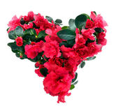 Heart from azalea flowers — Stock Photo