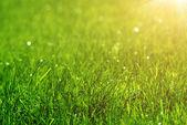 Sfondo verde erba — Foto Stock