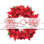 Christmas flower — Stockfoto