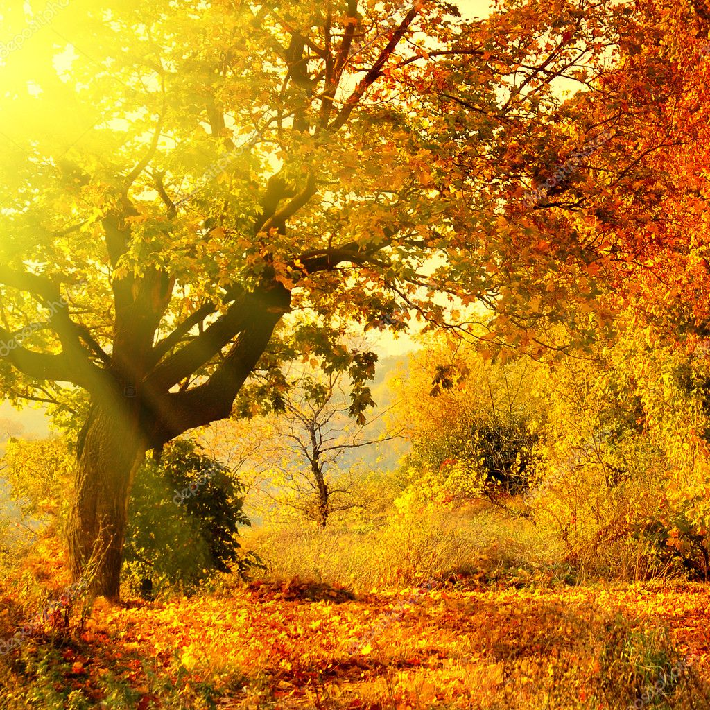 Autumn forest with sun beam — Stok fotoğraf #3020062