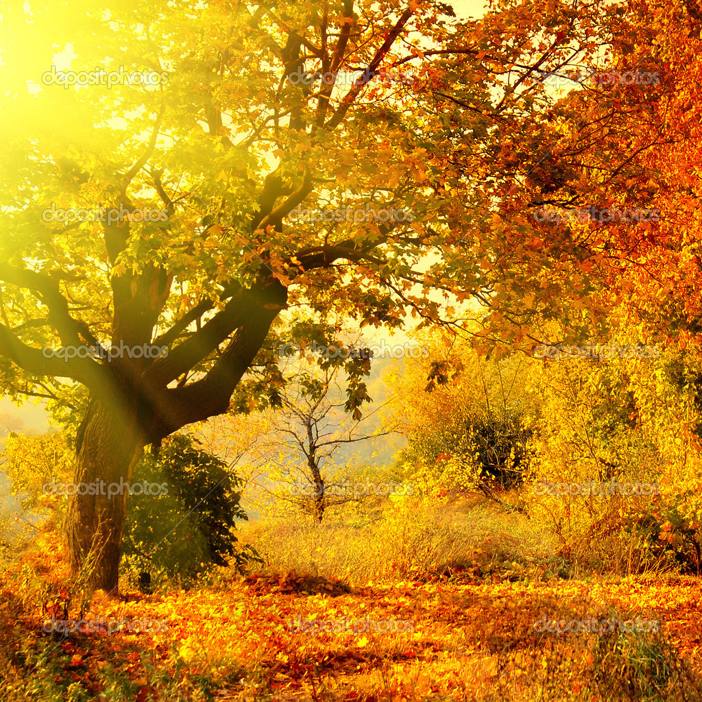 Autumn forest with sun beam — Stockfoto #3020062