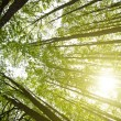 Sun in forest - Stock Photo