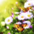 Two butterfly on flowers — Stock Photo #3378966
