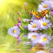 Foto Stock: Two butterfly on flowers with reflection
