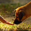 Dog and hand — Stock Photo #3378978