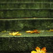 Autumn leaf on stairs — Stock Photo