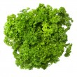 Bouquet of parsley - Stock Photo