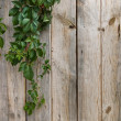 Wooden wall with green leaves — Stock Photo