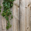 Wooden wall with green leaves — Stock Photo #3379572